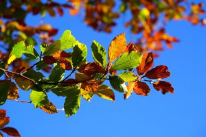 Herbst Fellwechsel